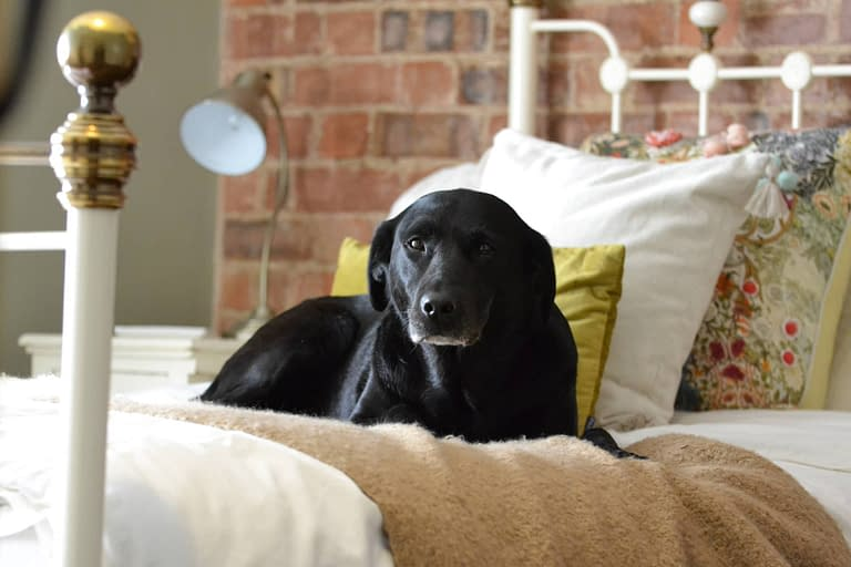 The Telegraph – Should we let our dog sleep on our beds?